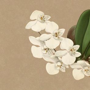 Phalaenopsis Casta Tea Towel