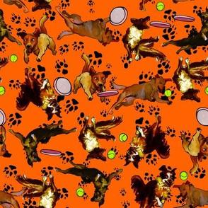 dogs on orange