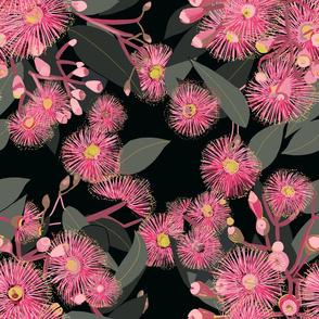 flowering pink gums on black