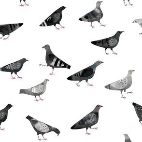 Pigeons White