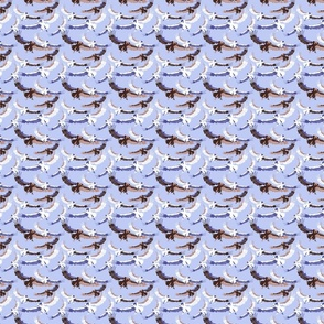 blue african vultures