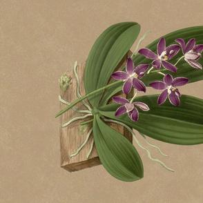 Phalaenopsis Speciosa Tea Towel