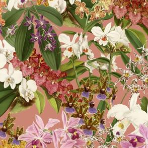 Mélange d'Orchidées on Salmon 150
