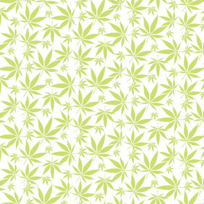 Cannabis leaves - lime on white