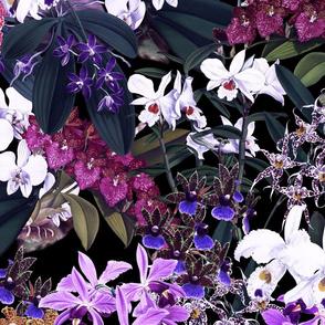 Mélange d'Orchidées Midnight 300