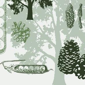 evergreens - greens