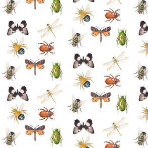 Australian Insect Collage