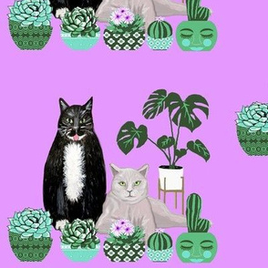 cats, monstera , succulents and cacti on lavender