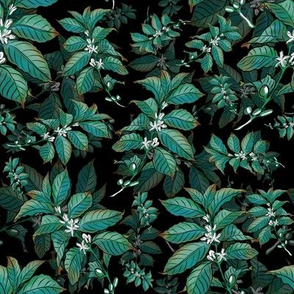 Coffee Bean Plant Turquoise