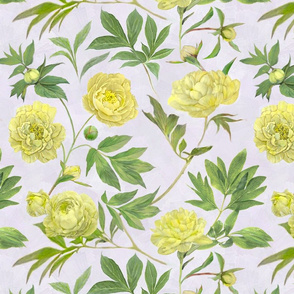 yellow-peony_wallpaper