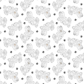 Trotting Coton de Tulear and paw prints - white
