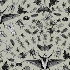 Insects Grayscale