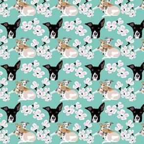 Ladybugs & Sea  Shells