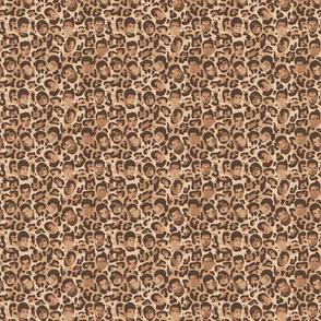 Glambert leopard