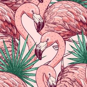 wild flamingo