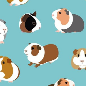Guinea Pigs on Turquoise - large scale