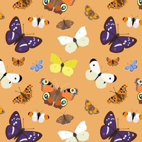 Butterflies on Orange - large scale