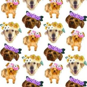Princess Puppies