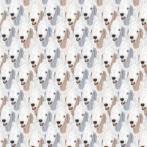 Bedlington Terrier portrait pack