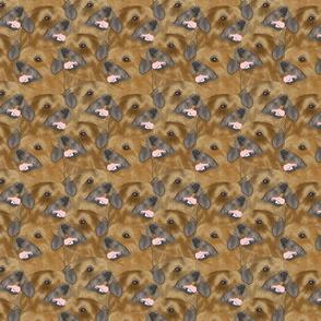 Border Terrier portrait pack