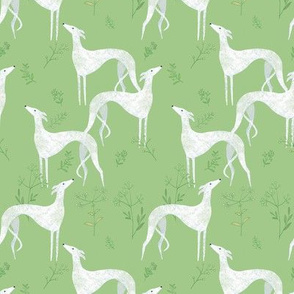 White sighthounds and greens