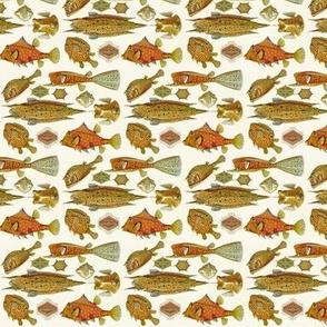 Ernst Haeckel Ostraciontes Fish Railroaded
