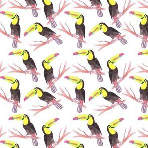 Keel billed Toucan or Ramphastidae sulfuratus bird seamless watercolor birds painting