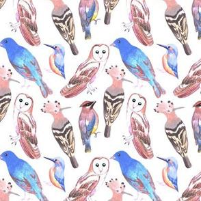 Endangered birds watercolors art