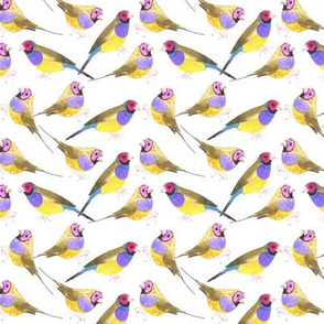 Gouldian finch birds seamless watercolor background