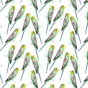 Green budgerigar birds watercolor