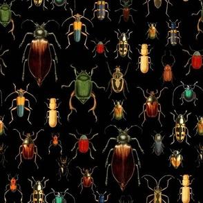 "10"" Vintage Beetles and Bugs on Black"