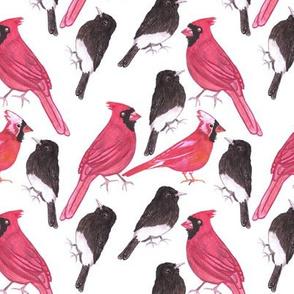 Cardinals and black phoebe watercolor repeat art
