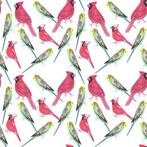 Budgies and cardinals watercolor birds in complementary colors