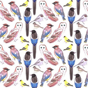 Various birds watercolor- barn owl, black billed magpie, bushtit, cedar waxwing, american goldfinch, tufted titmouse,
