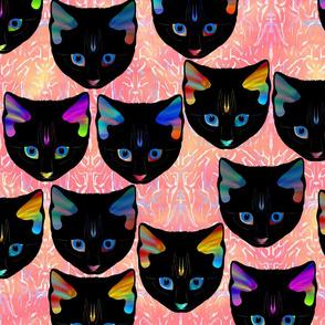 Black kittens 2
