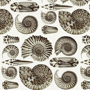 Ernst Haeckel Ammonite Coffee Railroaded