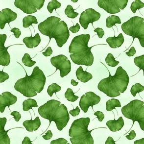 Ginkgo in green