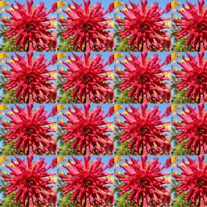 Red Flower Medium