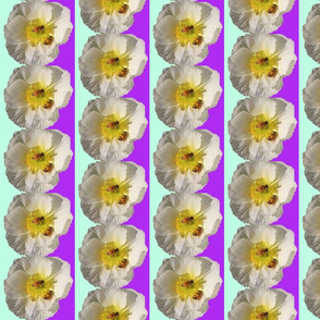 White Poppy with Bees Mint and Purple