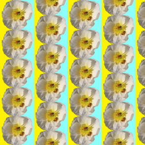 White poppy  with Bees Yellow & Blue