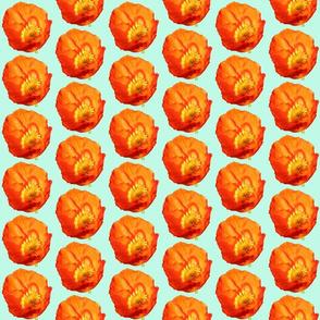 Orange Poppy with Mint