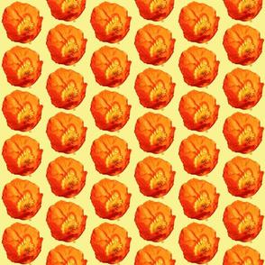 Orange Poppy with Yellow