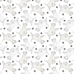 Trotting West Highland White Terriers and paw prints - white