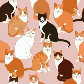 Ginger Cats Crowd on pink