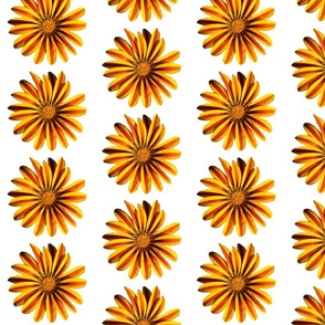 Yellow and Orange flower with White background