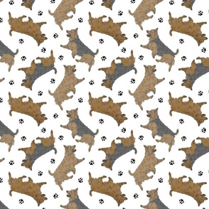 Trotting Australian Terriers and paw prints - white