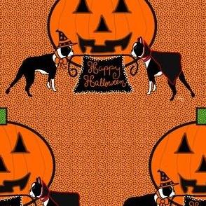 Happy Halloween Boston Terriers