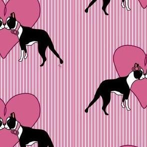 Boston Terrier Love Forever!