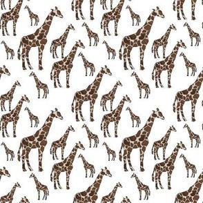 Giraffes on White Background