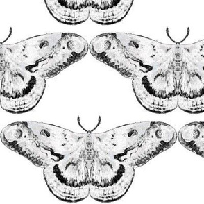 White & Black Mystic Moth on White